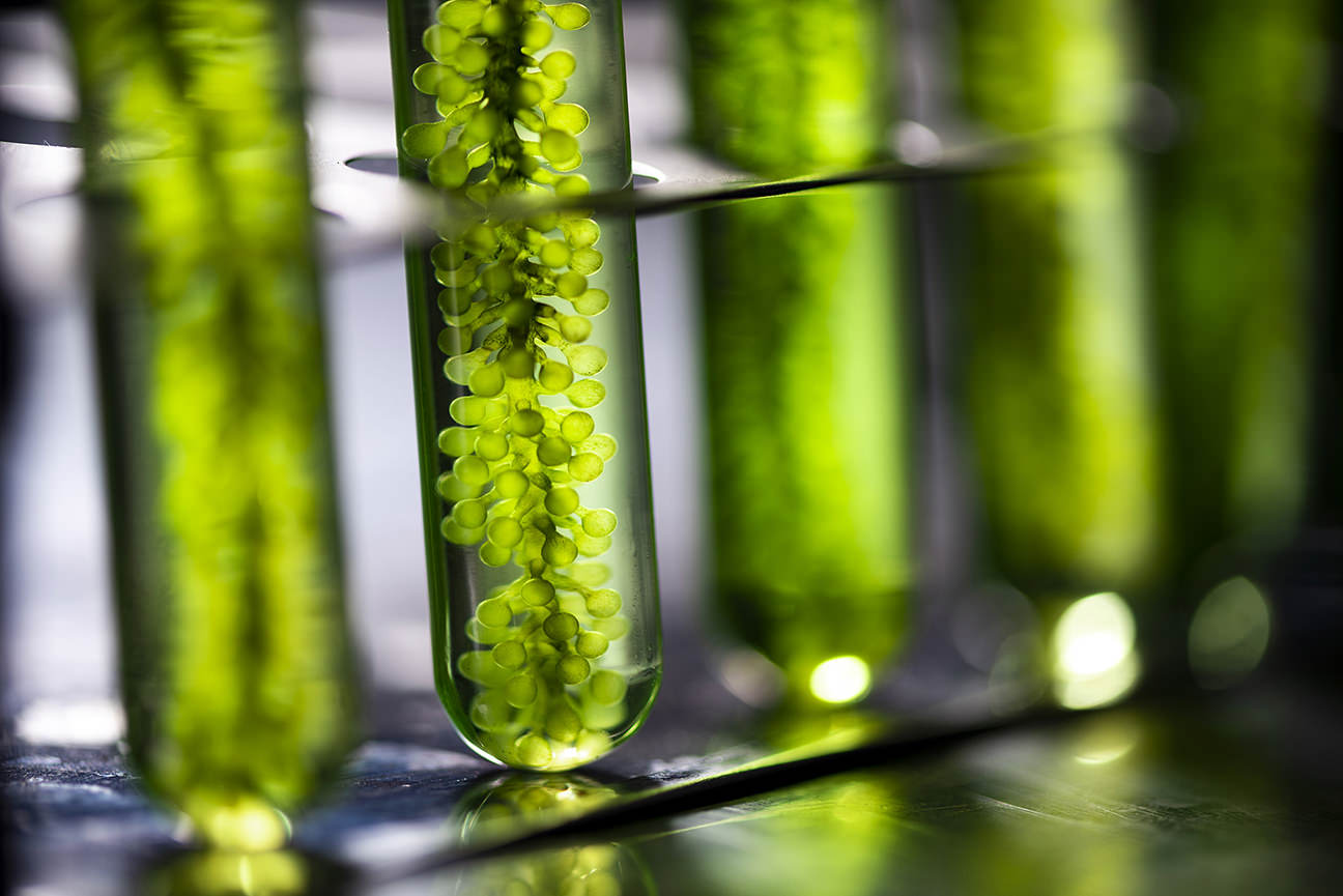 photobioreactor In Lab Algae Fuel Biofuel Industry, Algae Fuel, Algae Research In Industrial Laboratories